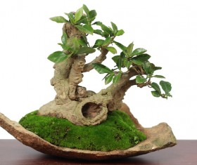 Beautiful bonsai tree gesture Stock Photo