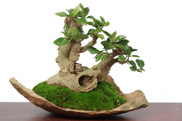 Beautiful bonsai tree gesture Stock Photo