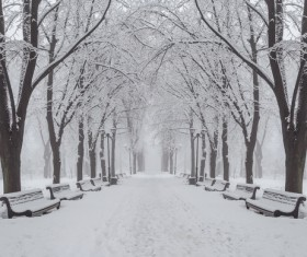 Beautiful park snow scene Stock Photo
