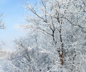 Beautiful winter rime Stock Photo 01