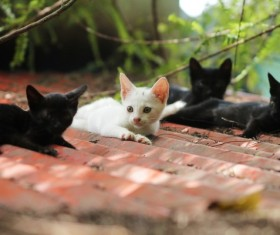 Black kitten and white kitten on the roof Stock Photo