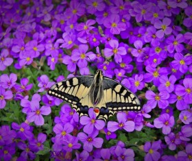 Butterfly closeup on purple flower Stock Photo