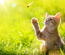 Cats catching butterflies Stock Photo 01