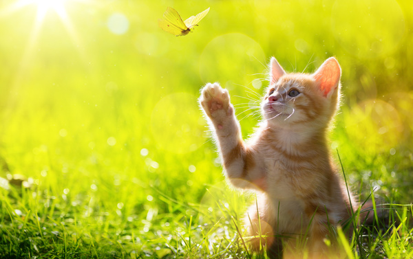 Cats catching butterflies Stock Photo 01