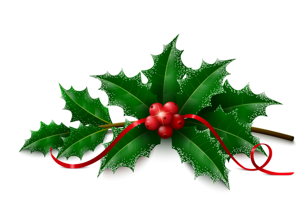 Christmas holly on white background vectors