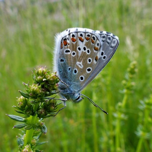 Closeup Beautiful colored butterfly Stock Photo