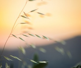 Closeup of fragile grass in nature Stock Photo