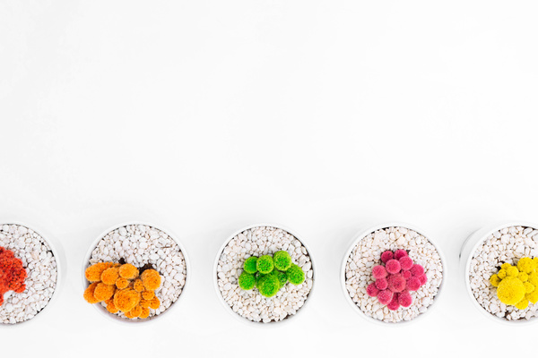 Colorful trees decoration in pebble pots Stock Photo