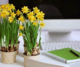 Daffodil on the desk Stock Photo