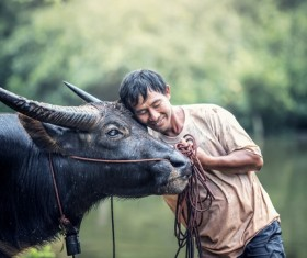 Farmers and beloved buffaloes Stock Photo