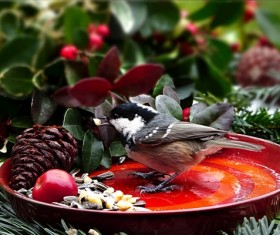 Foraging tit birds Stock Photo