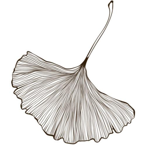 ginkgo leaf photoshop brushes free download