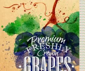 Grapes watercolor drawing vector
