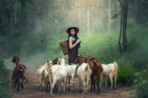 Grazing young girl Stock Photo 04