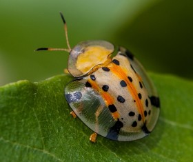 Ladybug on green leaves close-up Stock Photo