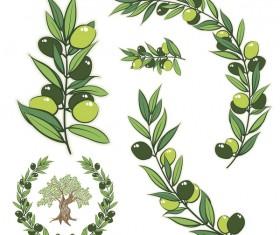 Olive Branch illustration vector
