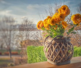 Potted calendula Stock Photo