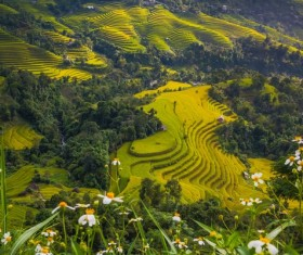 Rice terraced landscape Stock Photo