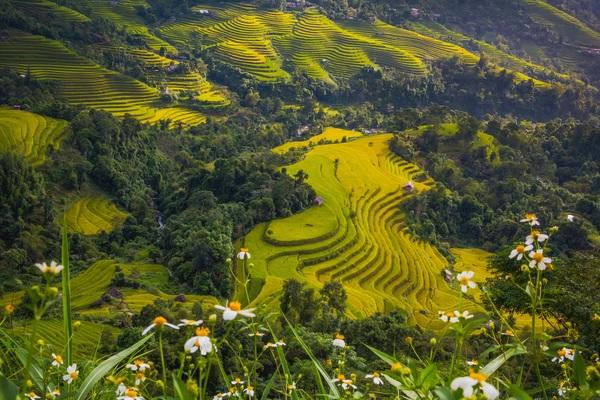 Rice terraced landscape Stock Photo