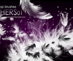 Various Feathers Photoshop Brushes
