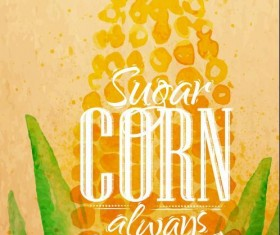 Watercolor drawn corn vector