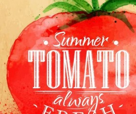 Watercolor drawn tomato vector