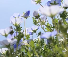 Wild blue flowers Stock Photo