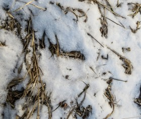 Winter Snow and Hay Texture Stock Photo 05