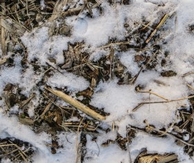 Winter Snow and Straw Texture Stock Photo 04