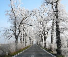 Winter cedar road landscape Stock Photo