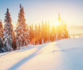 Winter sunshine and beautiful snow scene Stock Photo