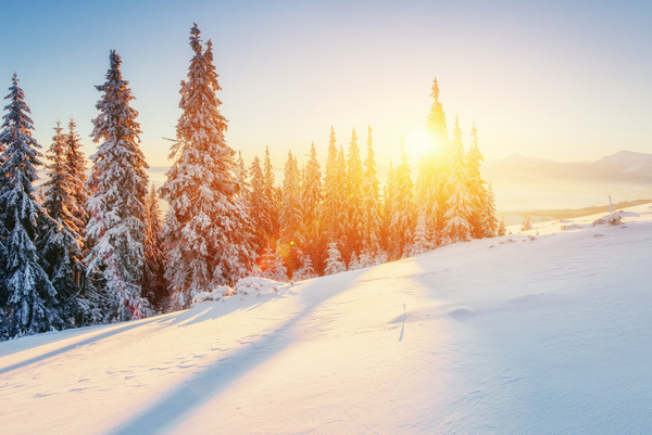 Beautiful Snowflake In The Sunlight: Winter Sunshine And Beautiful Snow Scene Stock Photo Free