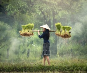 Woman carrying rice seedlings Stock Photo 01