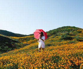 Young woman standing in bloom yellow flowers field Stock Photo