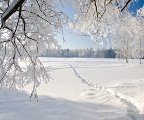 pure white snow Stock Photo 01