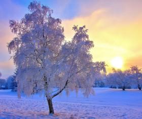 pure white snow Stock Photo 03