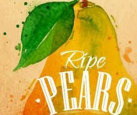 ripe pears watercolor drawing vector