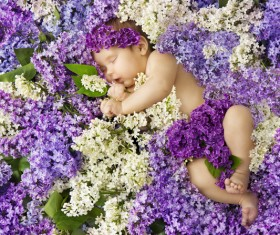 Baby lying in flowers Stock Photo 05