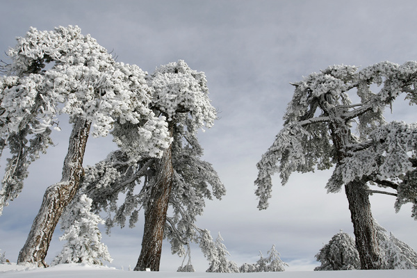 Beautiful winter tree hanging Stock Photo