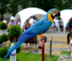 Blue & Gold Macaw Stock Photo