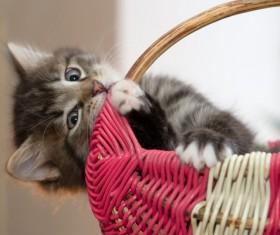 Cat playing alone basket Stock Photo