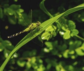 Close-up of dragonfly on green leaf Stock Photo
