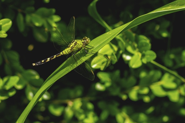 Close up of dragonfly on green leaf Stock Photo