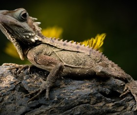 Close-up of lizard on tree trunk Stock Photo