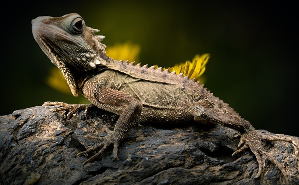 Close up of lizard on tree trunk Stock Photo