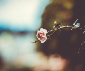 Closeup of little rose Stock Photo