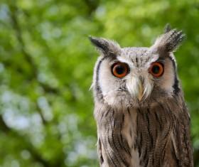 Closeup of wild owl in nature Stock Photo