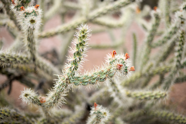 Closeup thorny cactus in nature Stock Photo