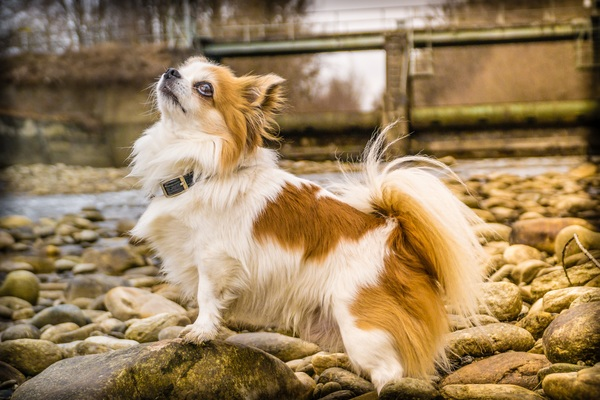 Cute butterfly dog Stock Photo
