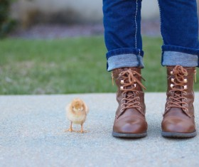 Cute little chick and owner Stock Photo